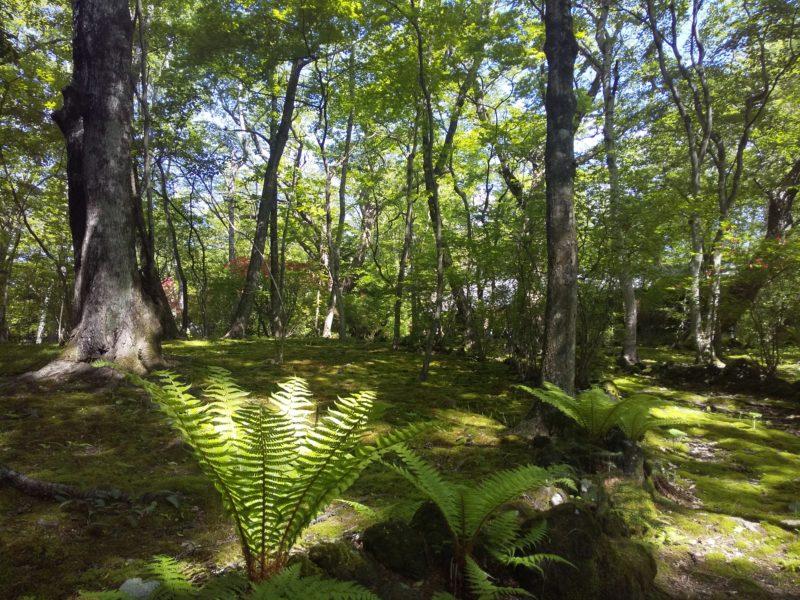 長倉神社の境内2