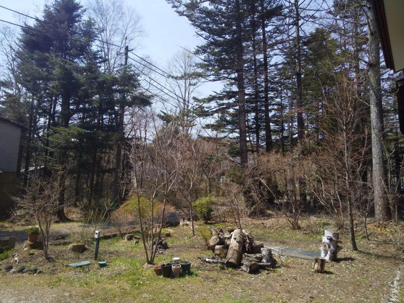 5月の軽井沢(庭の様子)
