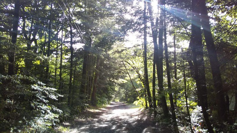軽井沢の静かな別荘地の様子