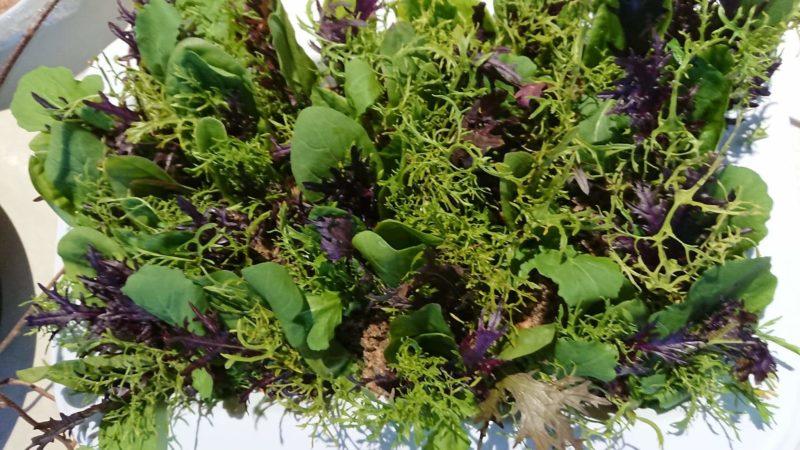 ココペリの野菜