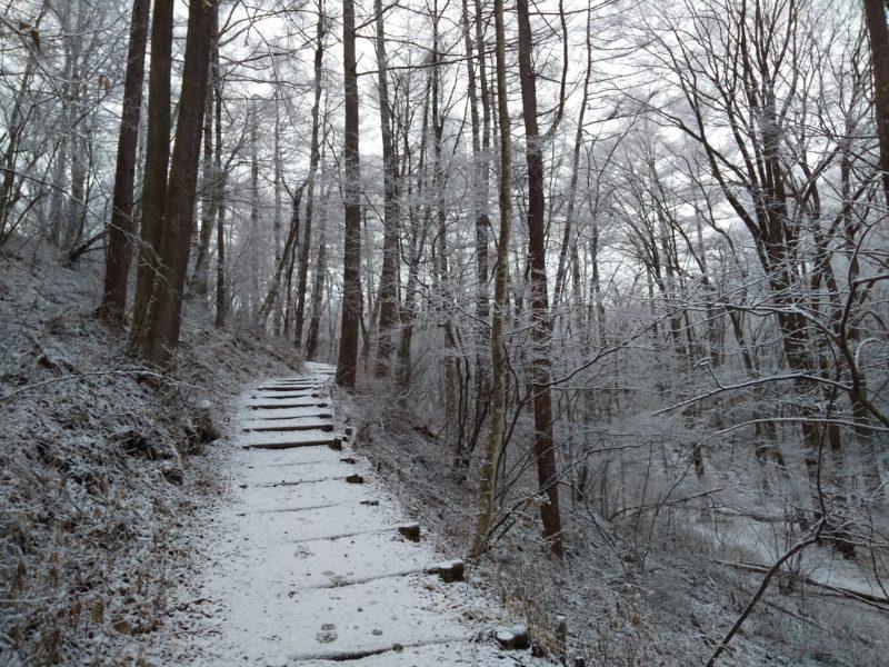 野鳥の森、軽井沢冬景色
