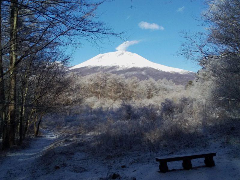 軽井沢の自然ー野鳥の森