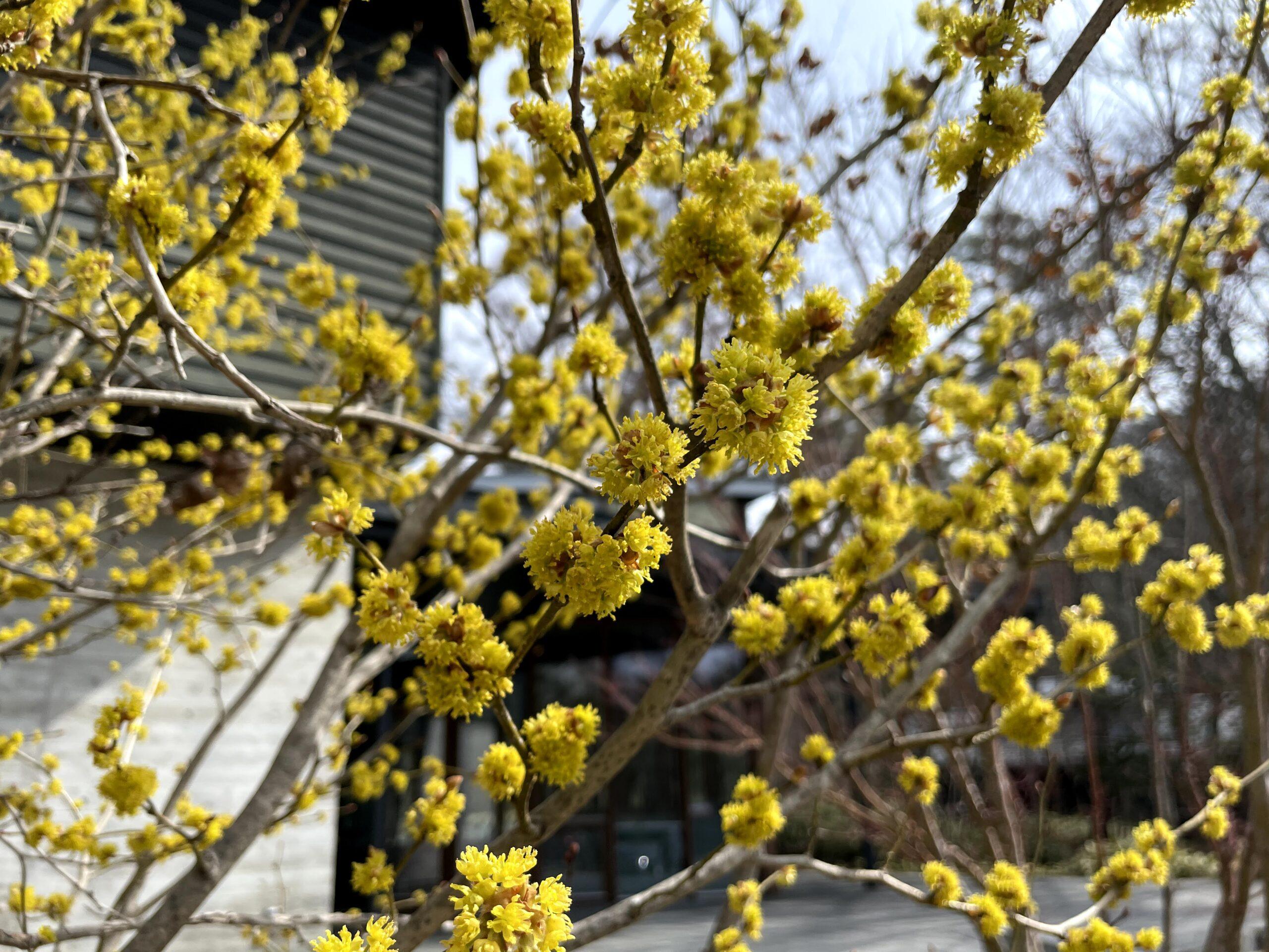 軽井沢の春景色
