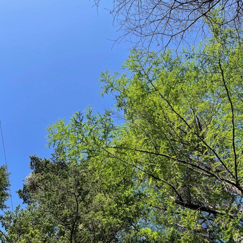 5月の軽井沢は新緑が素晴らしい
