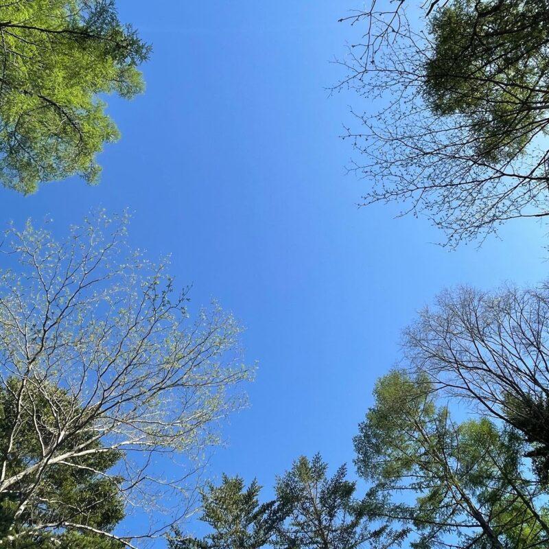 5月の軽井沢は新緑が素晴らしい3