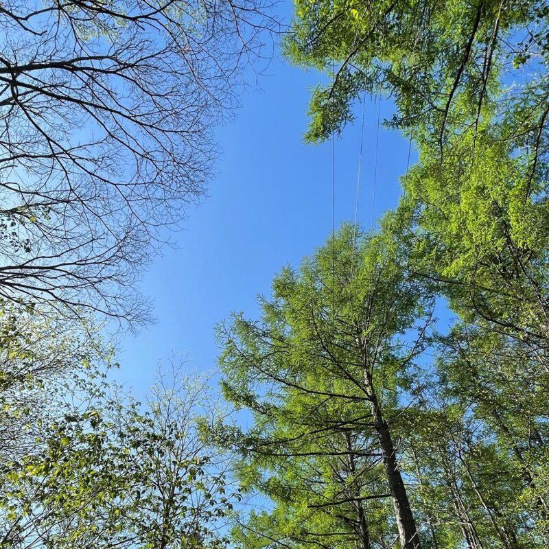 5月の軽井沢は新緑が素晴らしい2