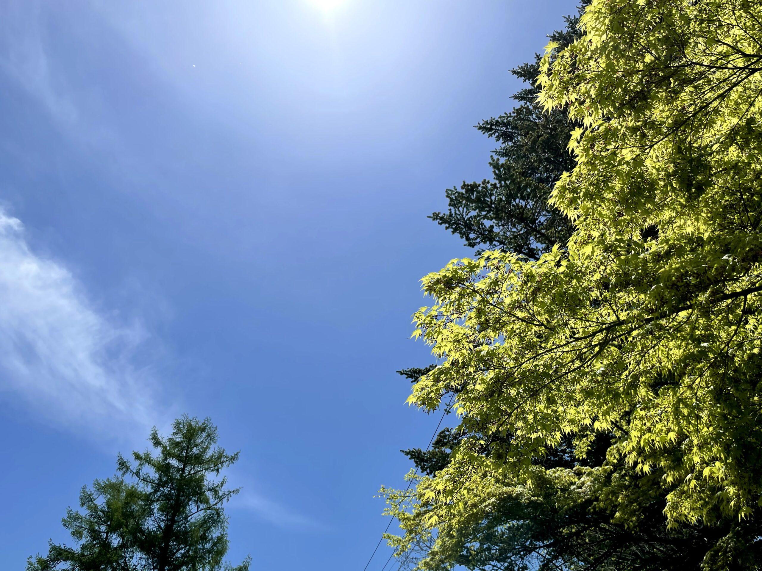 5月の軽井沢は新緑が素晴らしい5