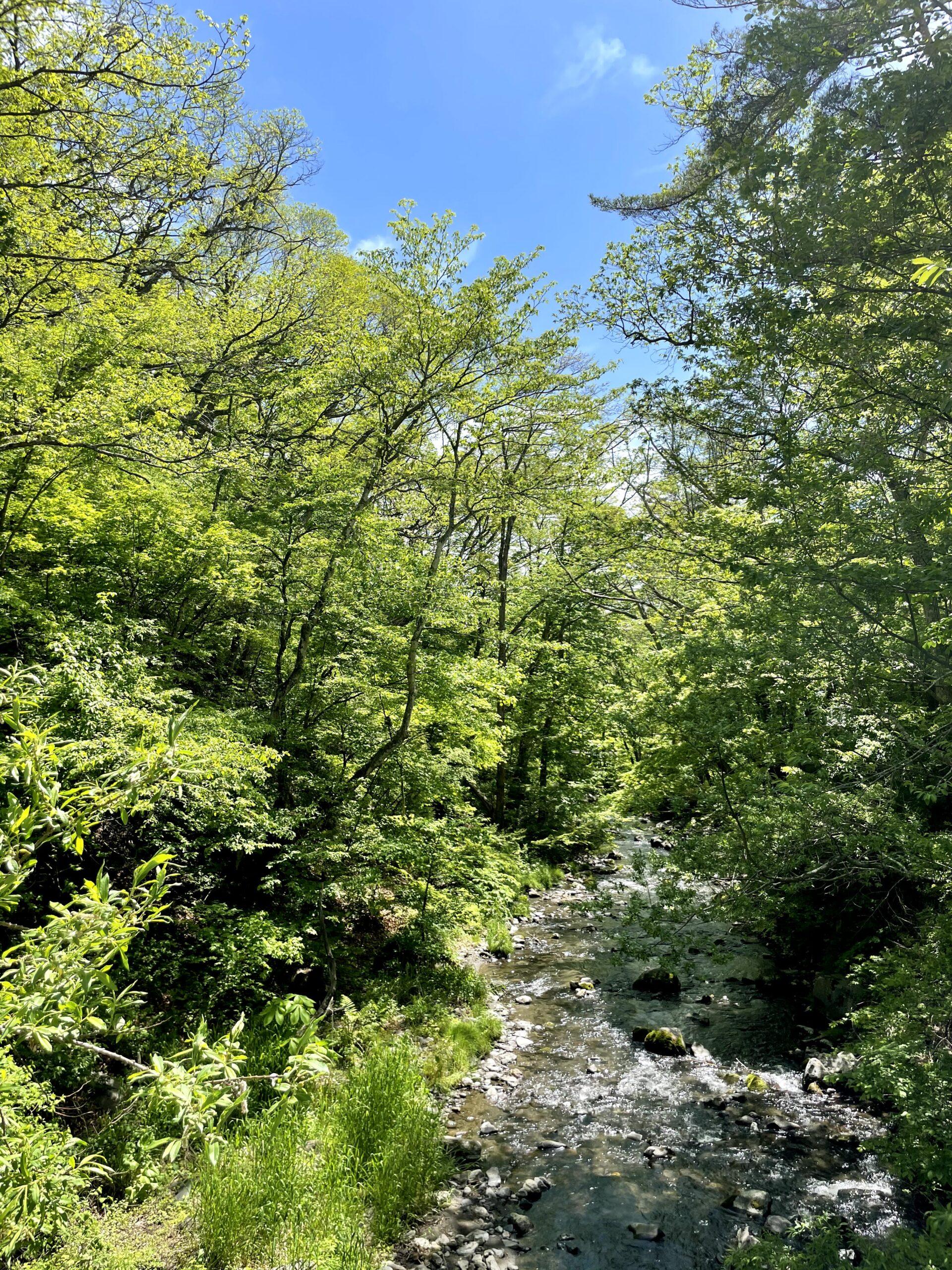 新緑の軽井沢星野エリアの湯川の様子