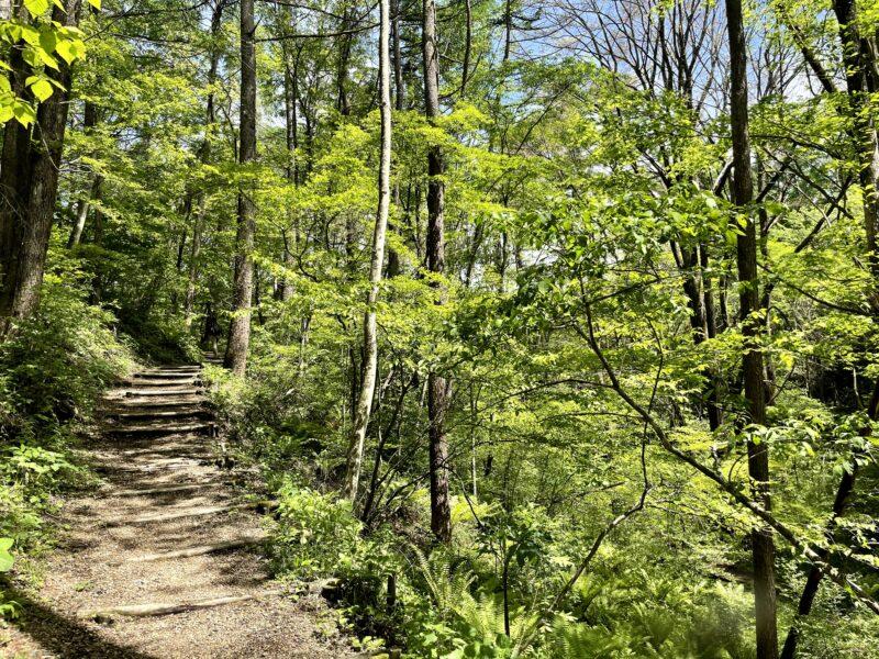 新緑の軽井沢野鳥の森