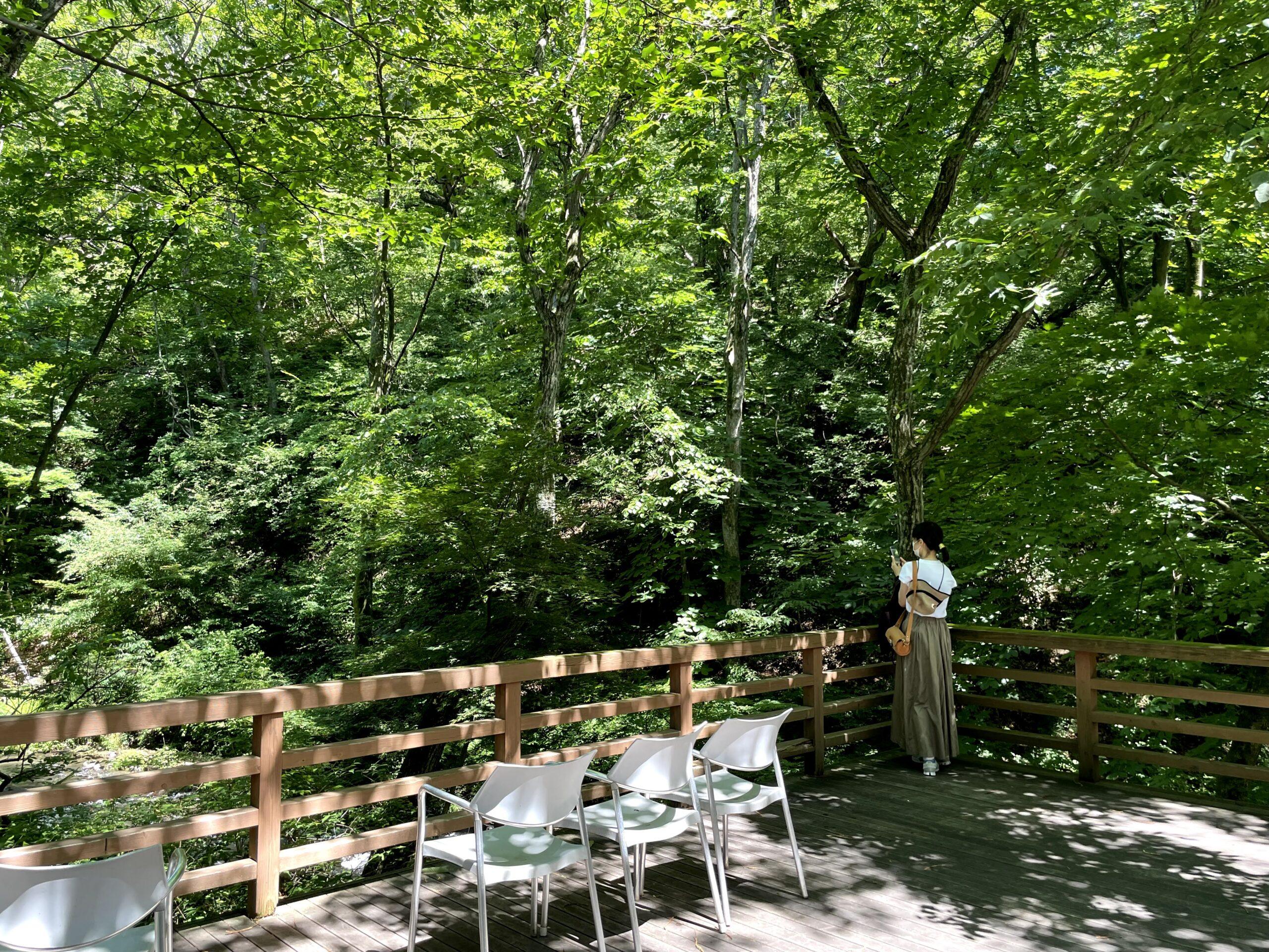 軽井沢の木漏れ日は夏も爽やかな風が吹く