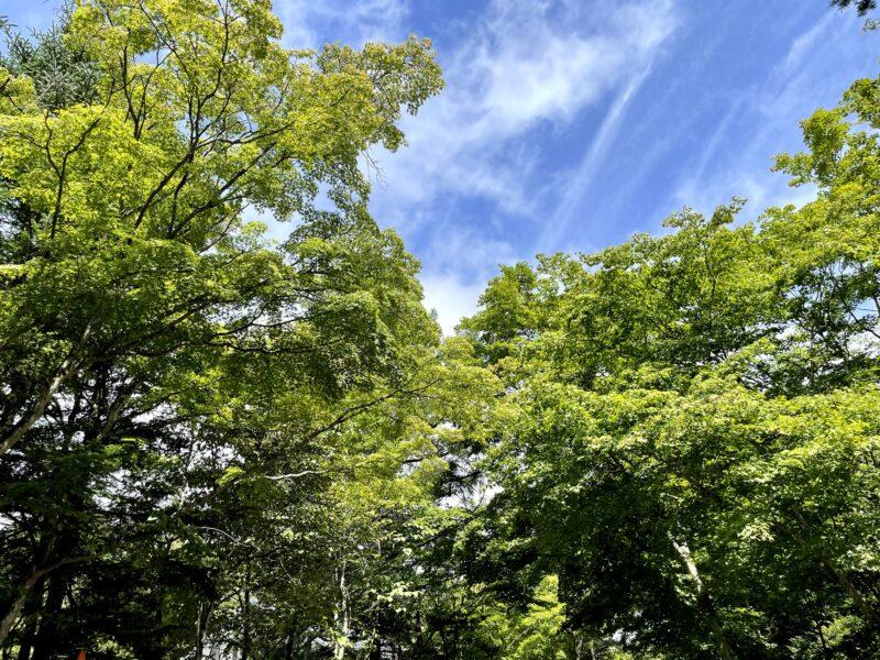 軽井沢の木々は秋の雰囲気