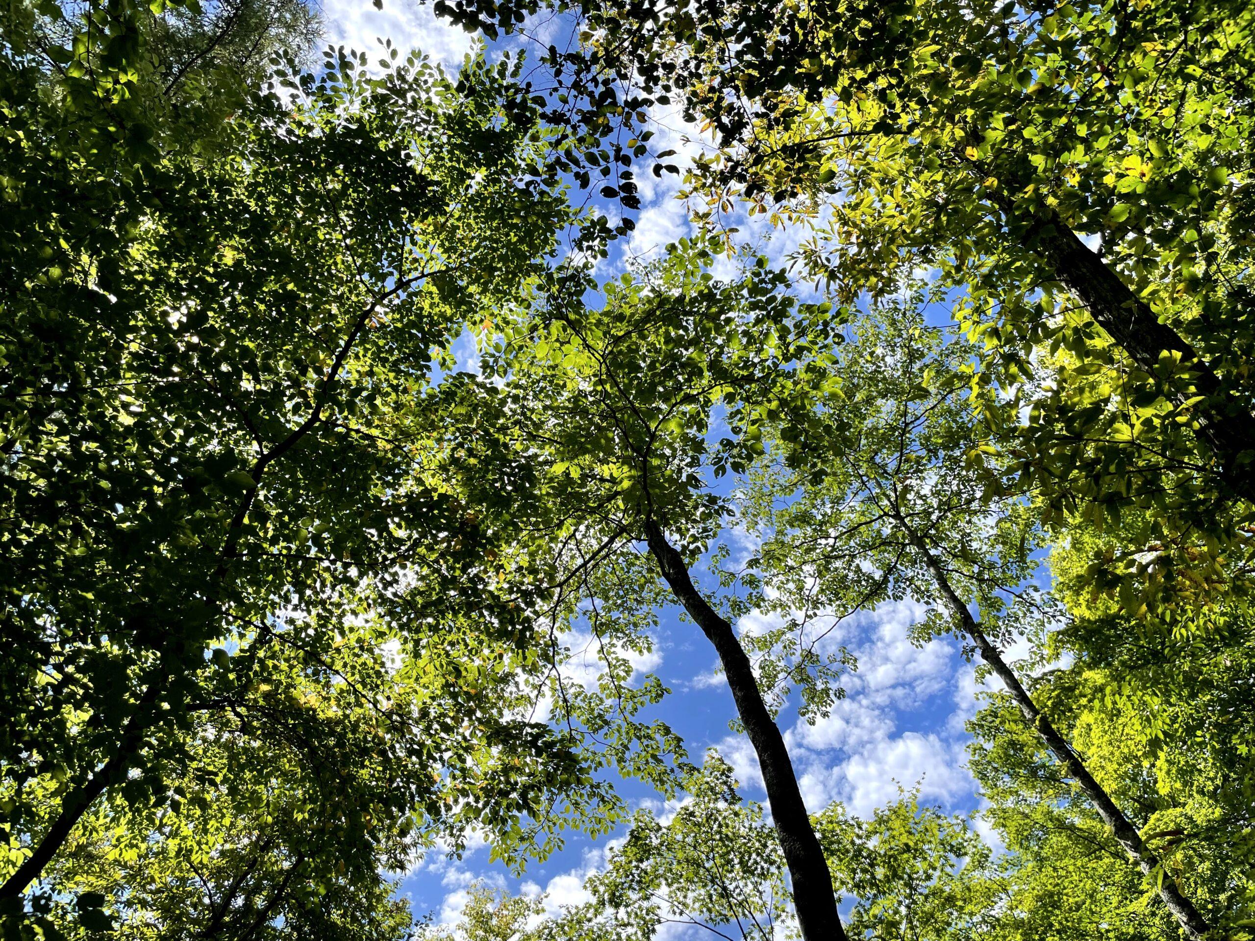 9月中旬の軽井沢の木々