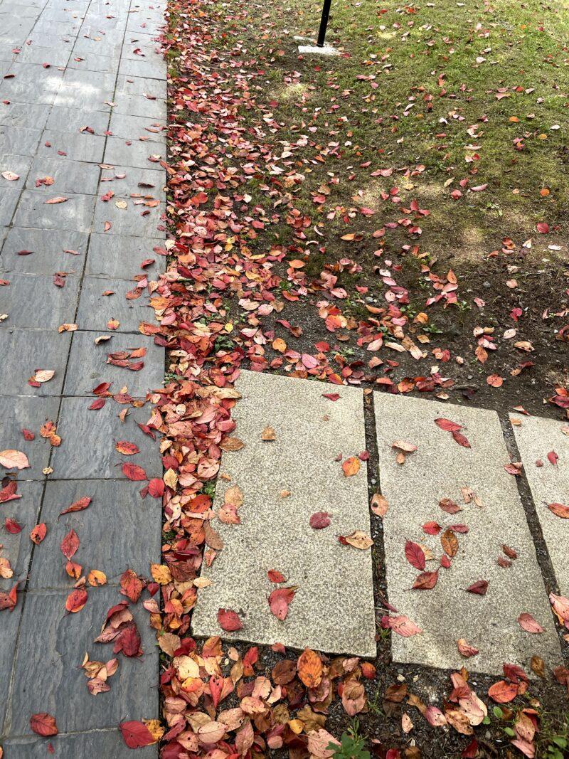 星野温泉トンボの湯前に広がる赤い落葉