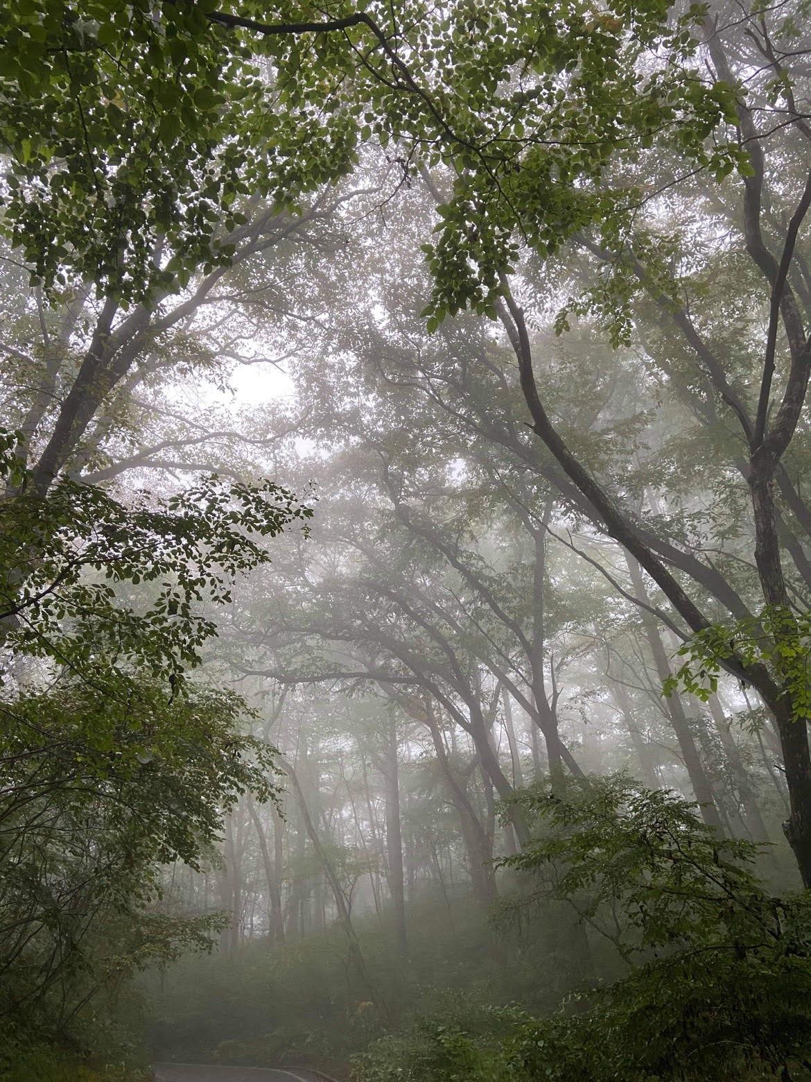 霧の深い10月はじめの軽井沢